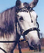 White Hungarian Bridle